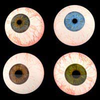 Eye Colour Iris Eumelanin Melanocytes